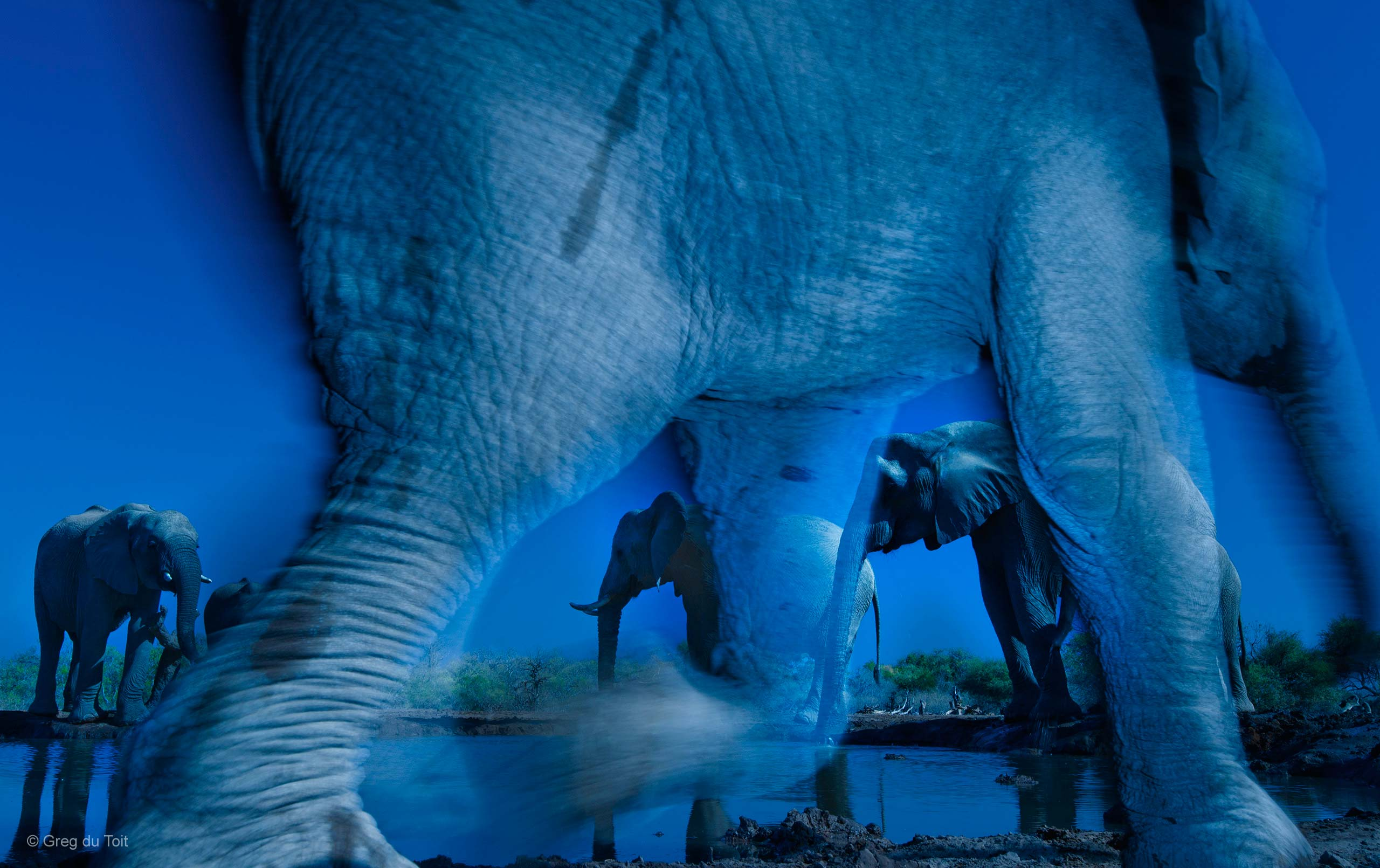 Wildlife Photographer Of The Year Essence of elephants