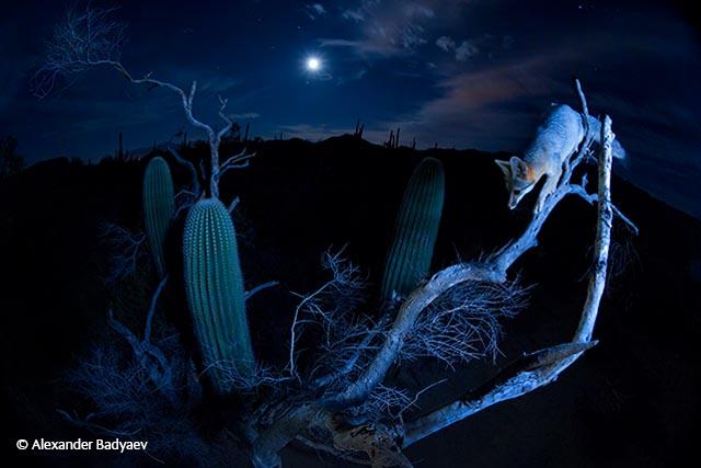 Moonlight climber
