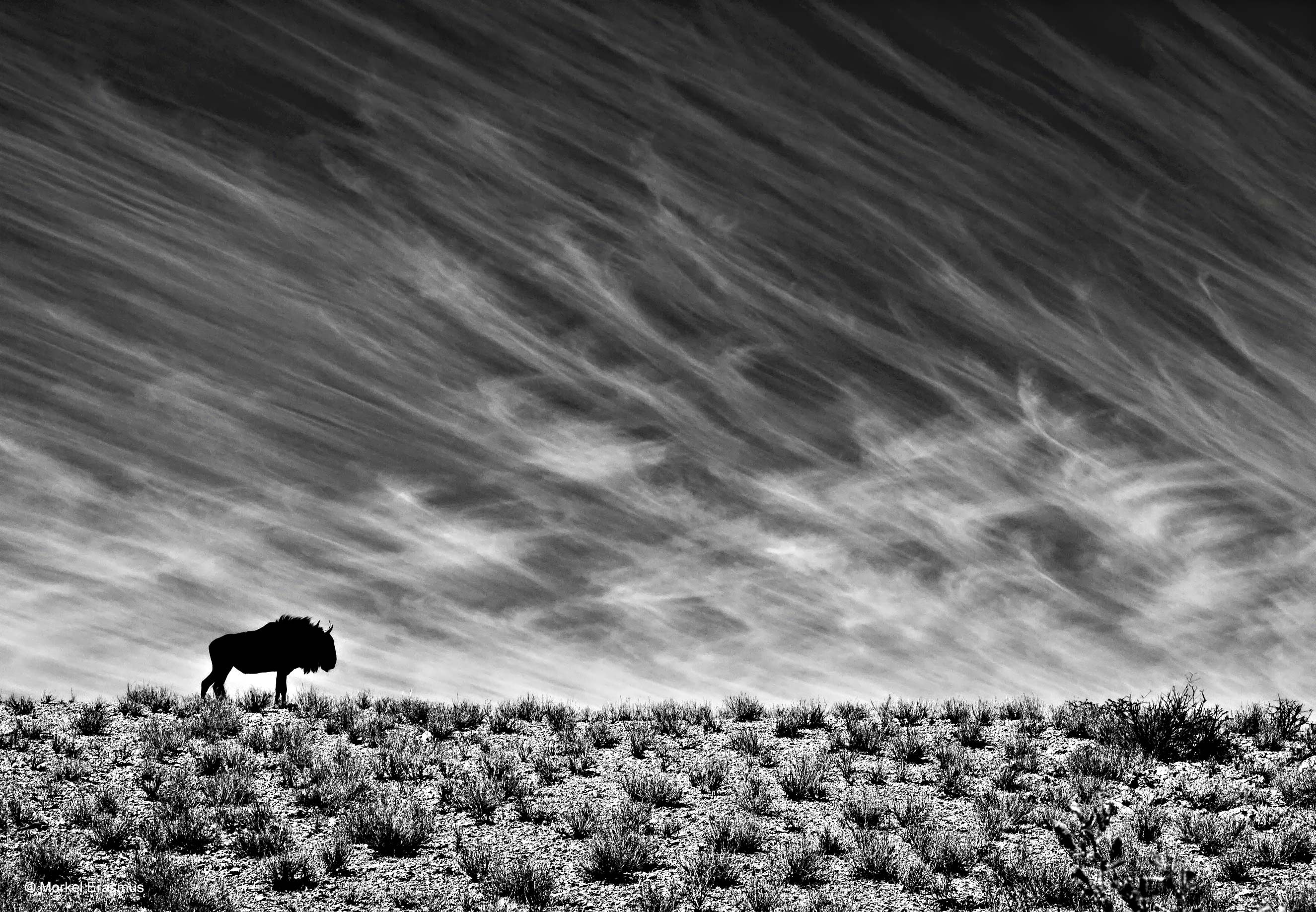 Desert survivor morkel erasmus nature in black white