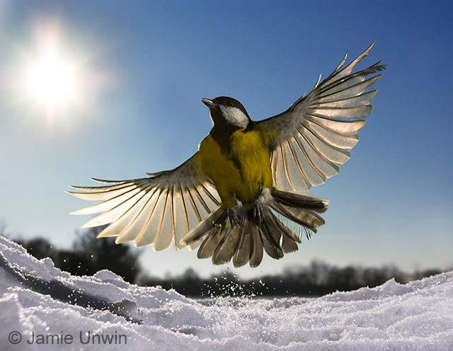 Frozen in flight