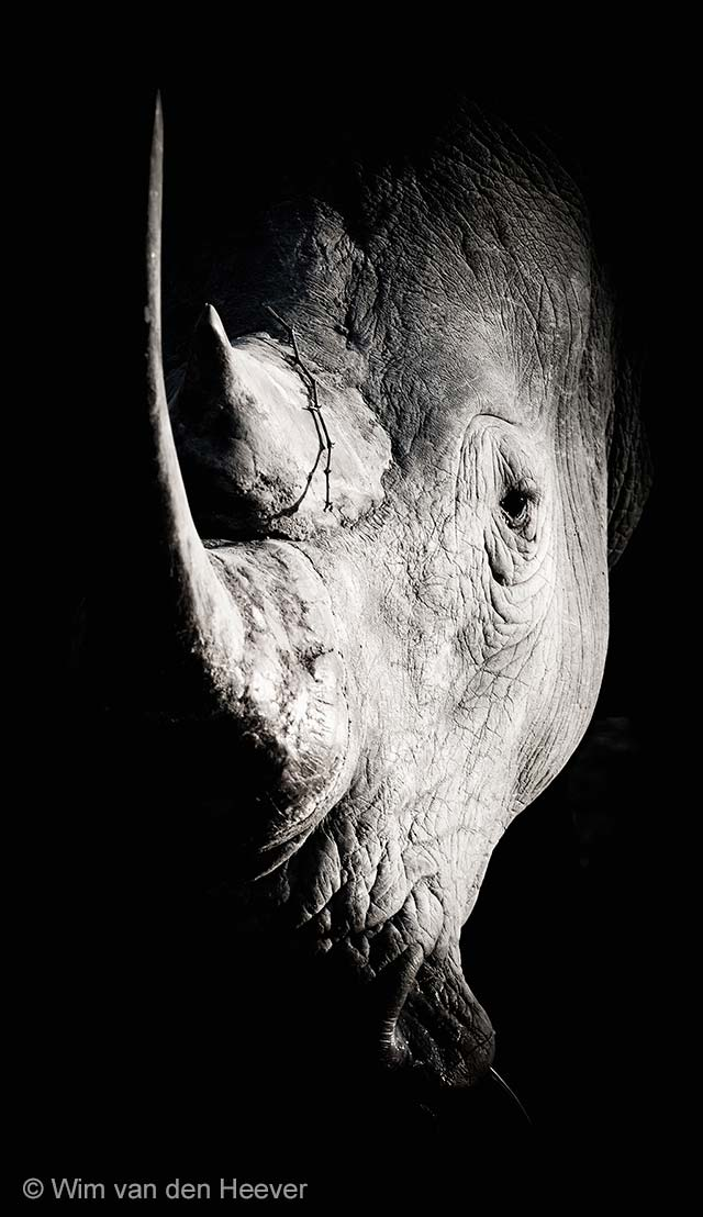 Rhino in charge
