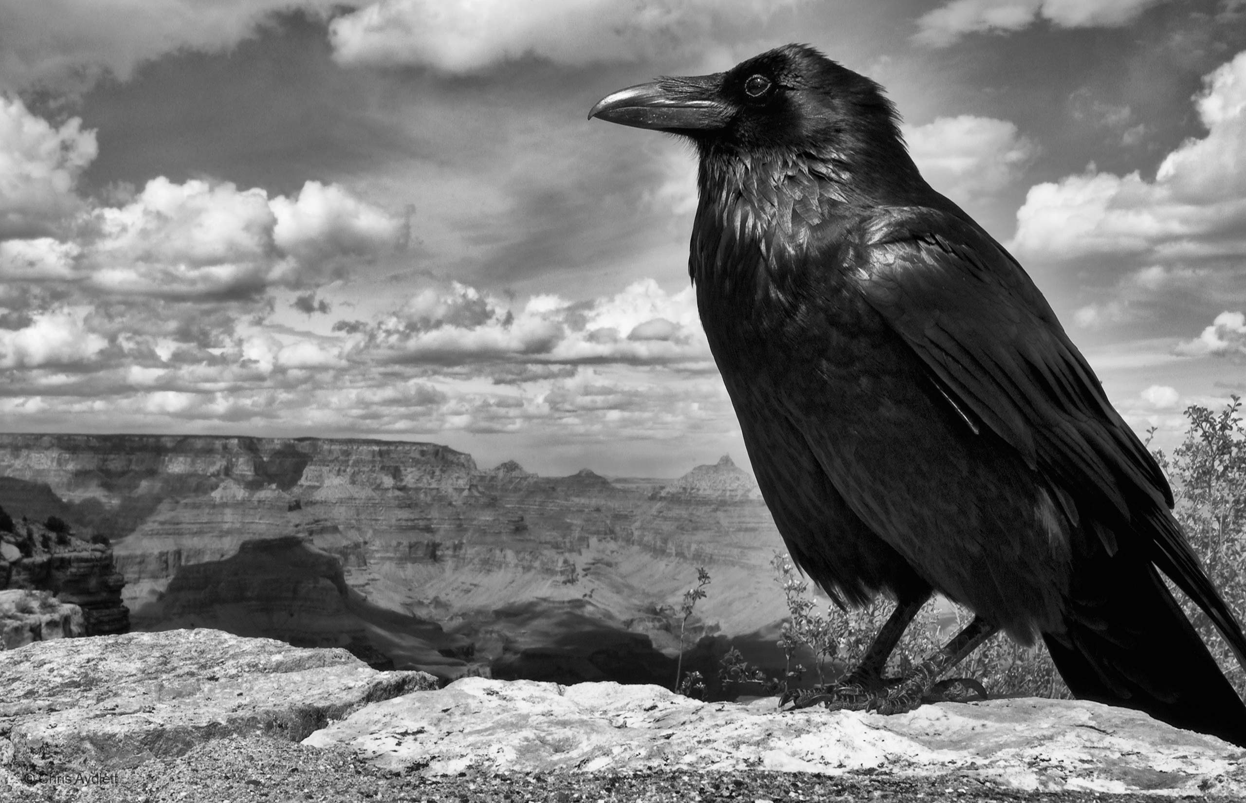 shot in the dark andrew schoeman nature in black and white