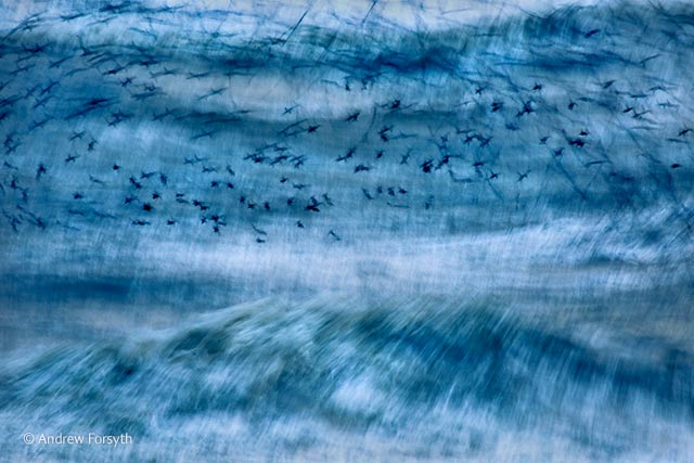 Murmuration in the storm