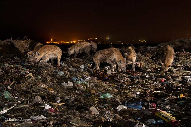 Dinner at the dump