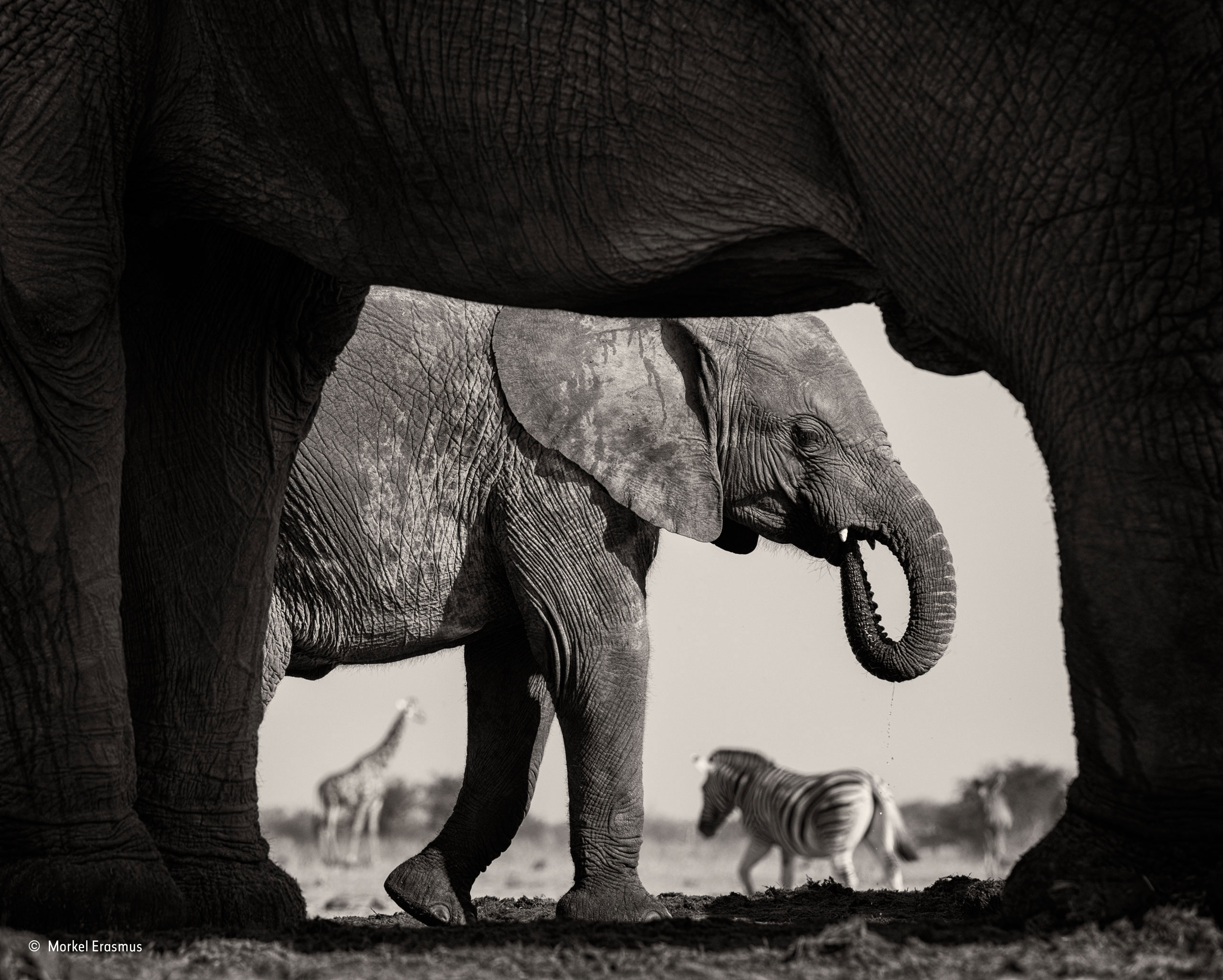 natural frame wildlife photographer of the year natural history museum natural frame wildlife photographer