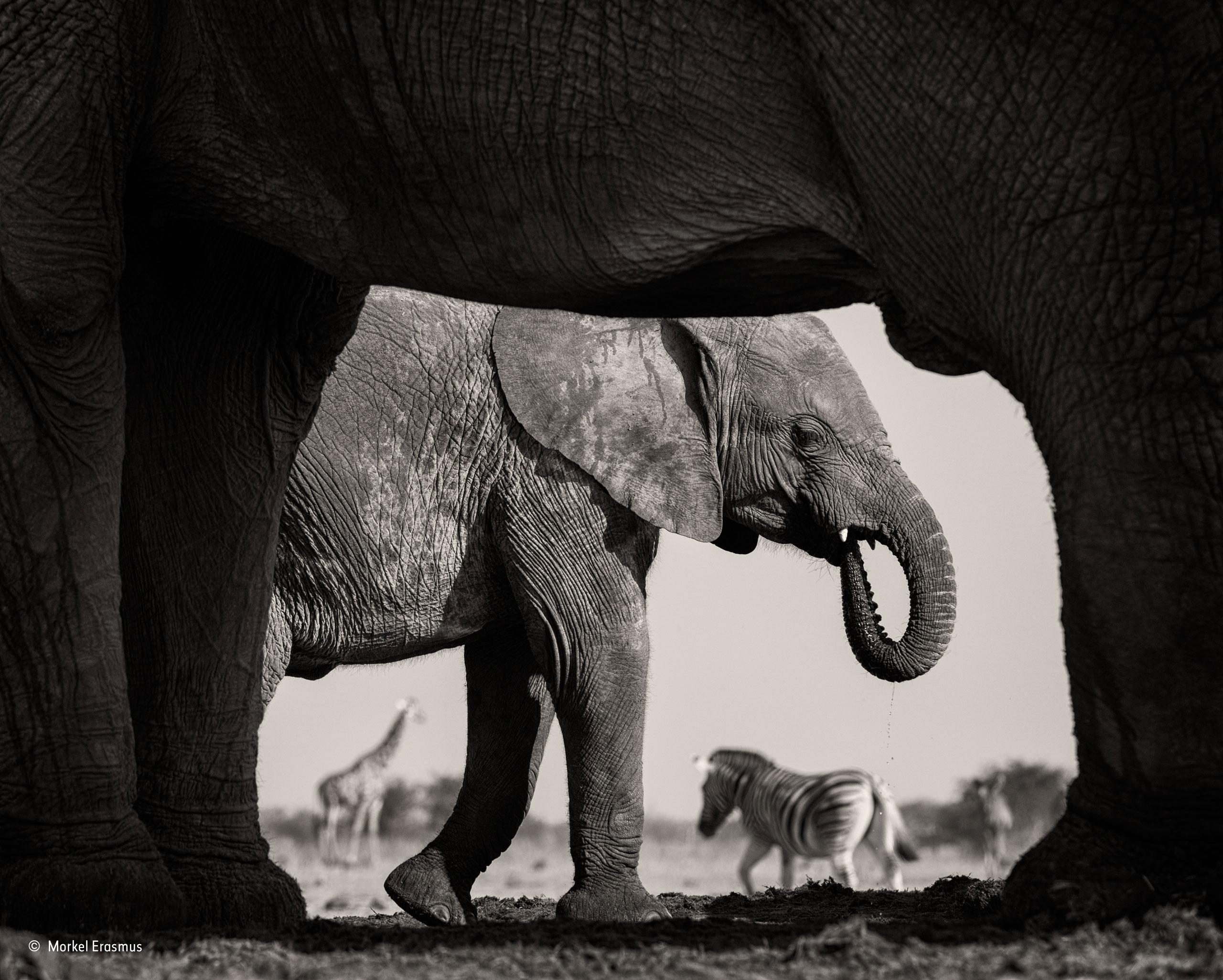 Natural frame | Morkel Erasmus | Black and White | Wildlife ...