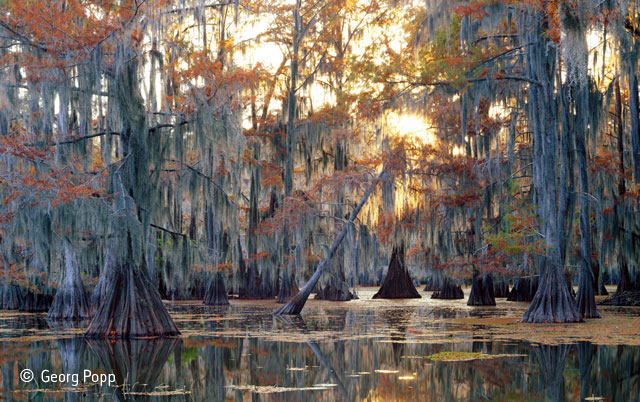 Autumn in Louisiana swamp