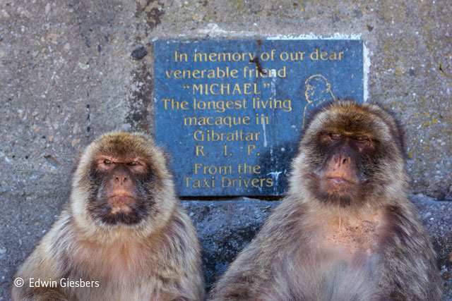 Macaque memories