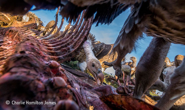 Adult awards | 2015 | Wildlife Photographer of the Year