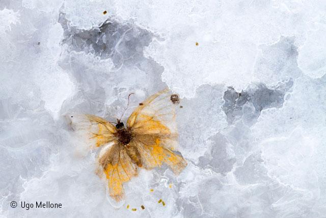 Butterfly in crystal