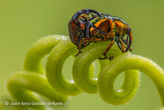 Beetle beauty and the spiral of love