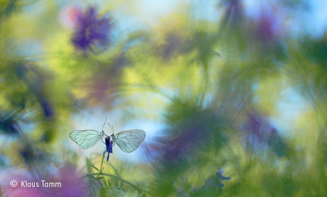 Wings of summer