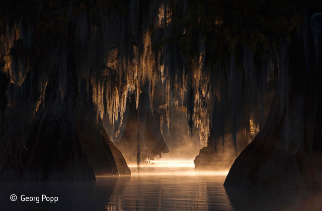 The heart of the swamp