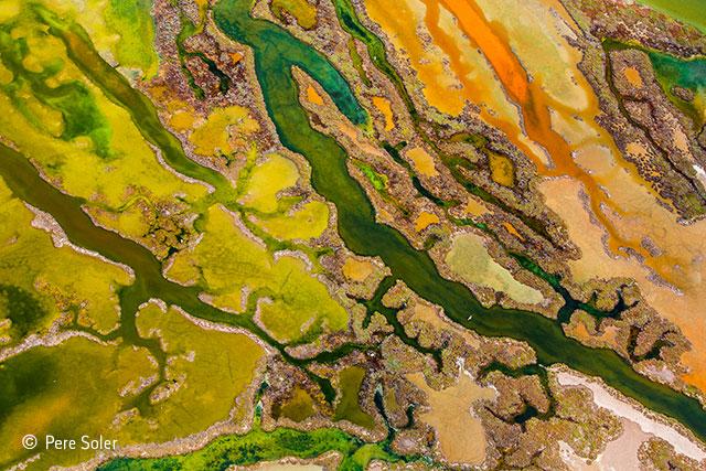 The art of algae