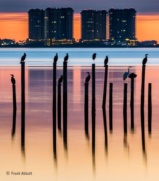 Cormorant cityscape