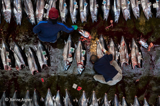 End of the line for tuna
