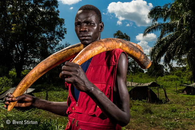 Ivory wars: from the frontline