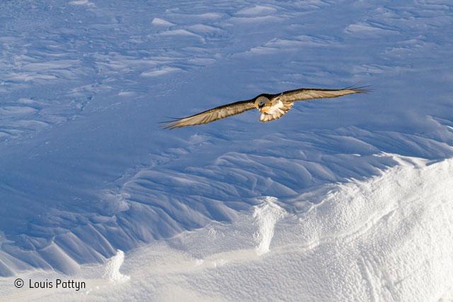 Alpine glider
