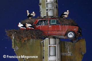 Stork art