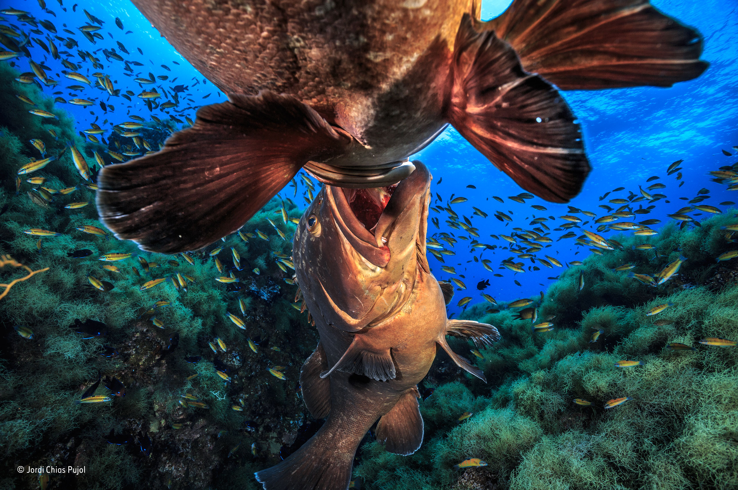 The disappearing fish iago leonardo reptiles for The big fish
