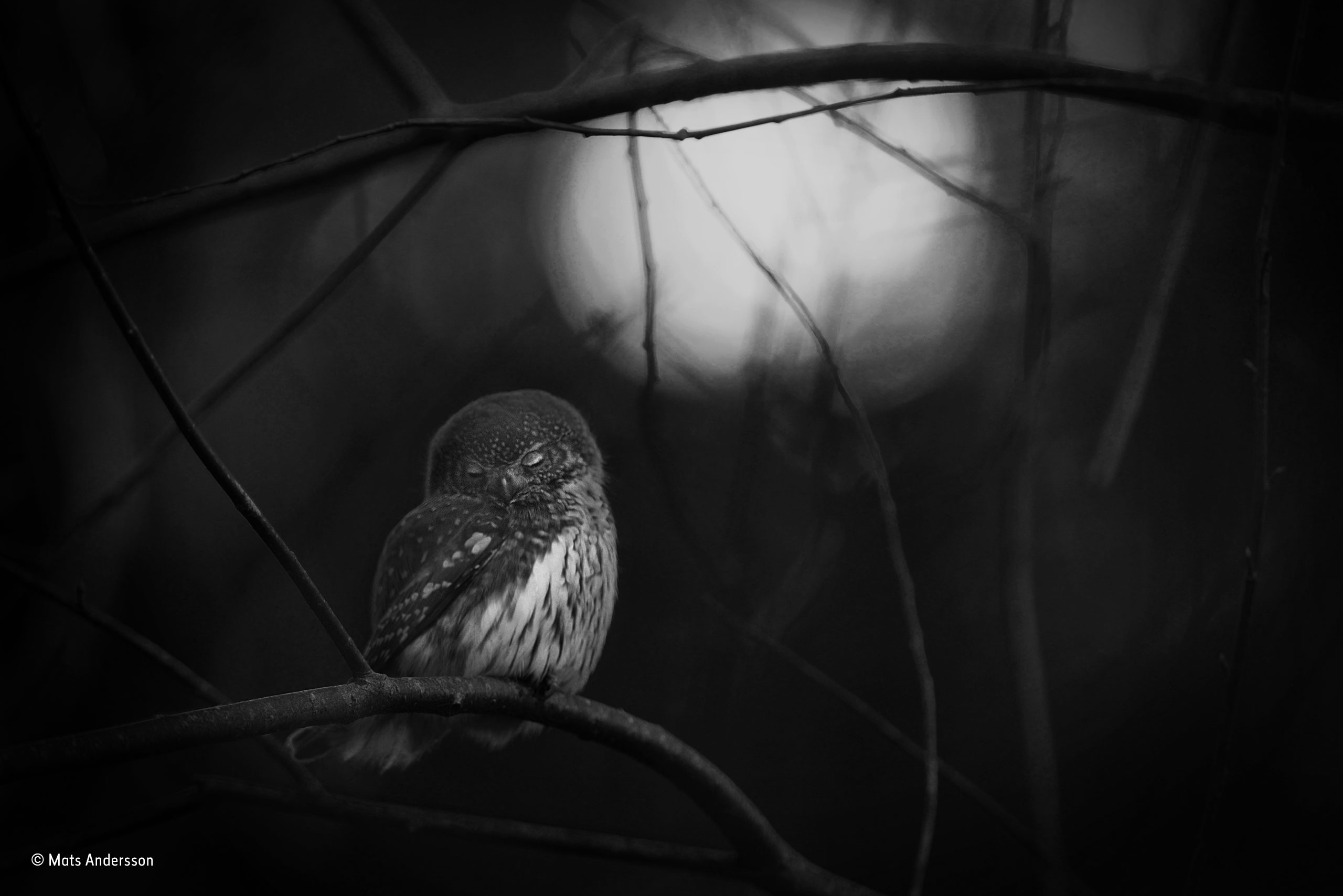 Requiem for an owl | Mats Andersson | Black and White | Wildlife ...