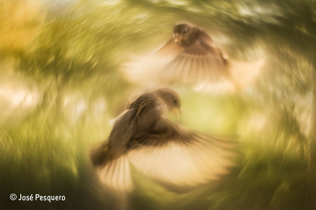 Spiralling sparrows