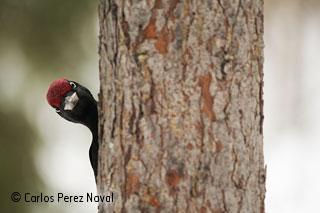 Peck and peek