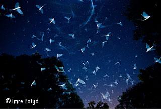 Swarming under the stars