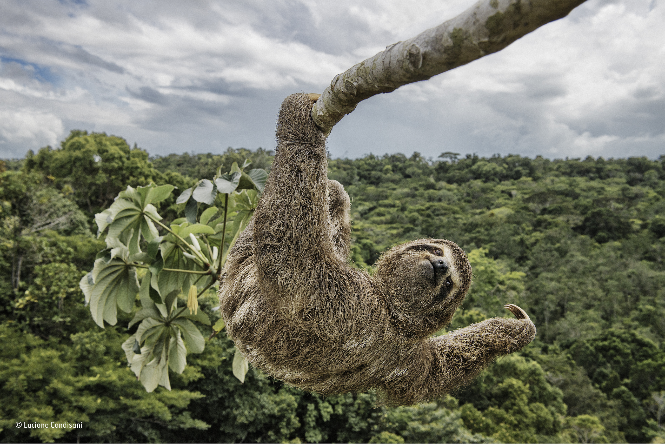 sloth hanging out luciano candisani special award people s