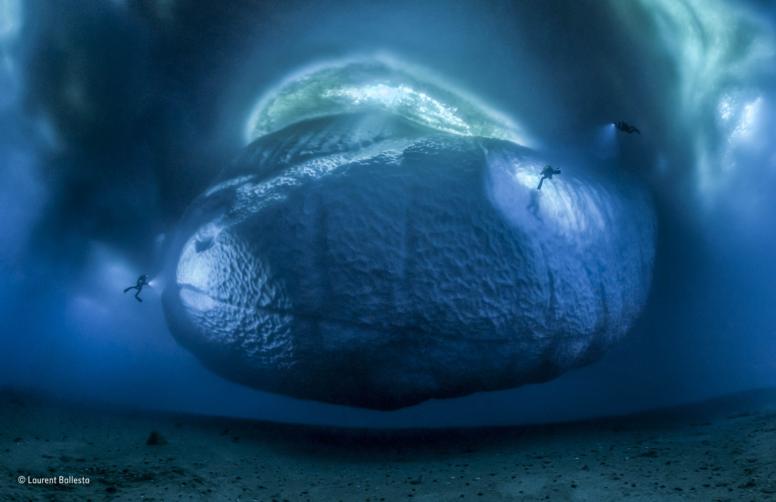 The ice monster   Laurent Ballesta   Earth\'s Environments   Wildlife ...