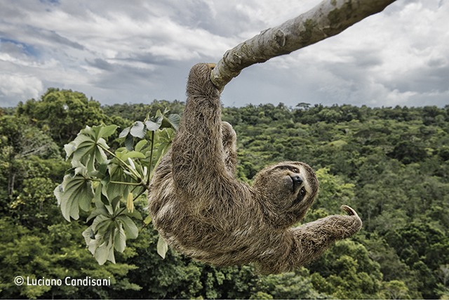Sloth hanging out
