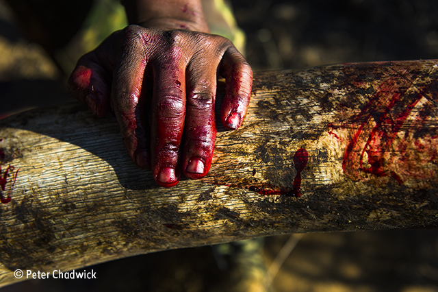 Bloody ivory