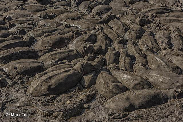 The mud crowd