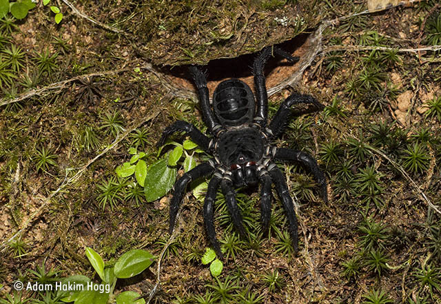 The make-you-jump spider