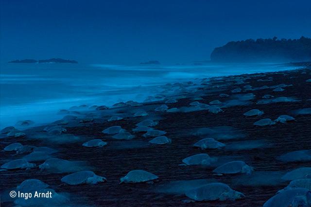 Night of the turtles