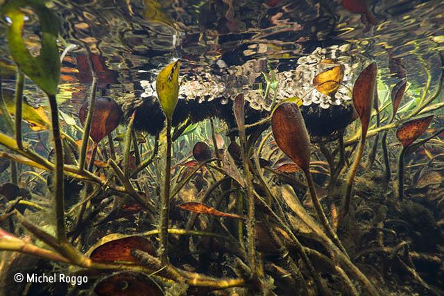 Freshwater Eden