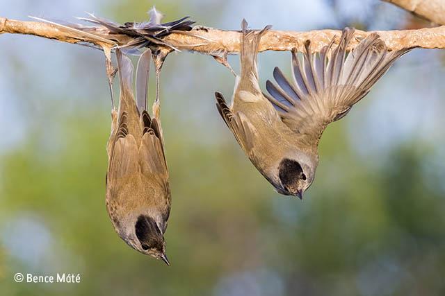 The bird rack