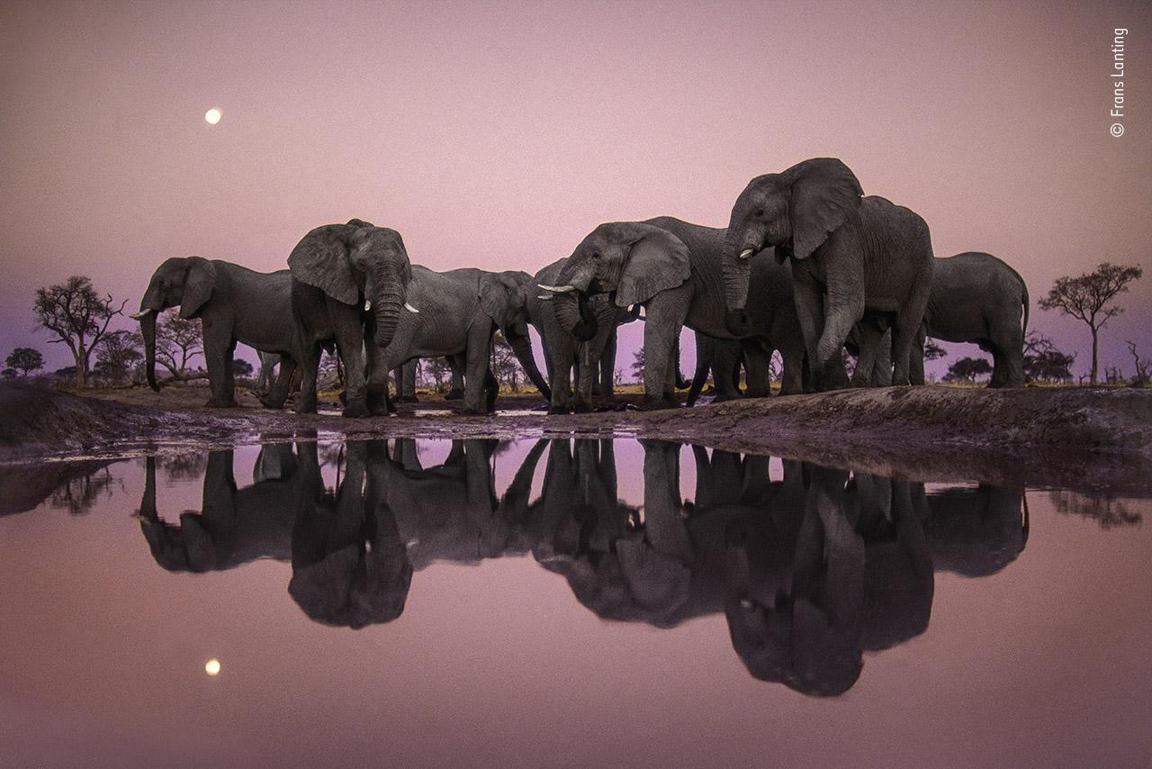 Elephants at Twilight