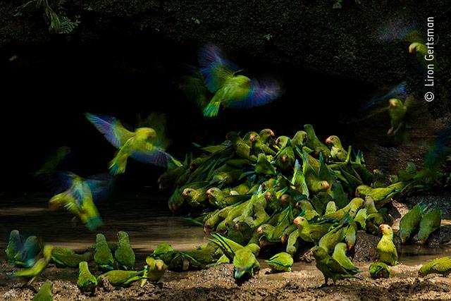 Colour, Sound, Action