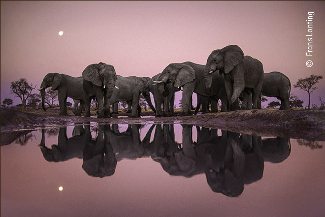 Elephants at Twilight