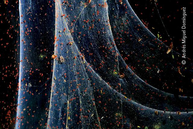 Cloak of Silk