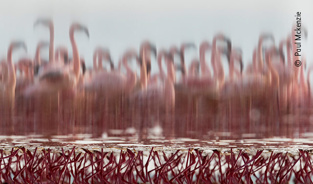 The Upside-Down Flamingos