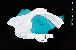 The Ice Pool