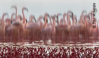 The Upside-Down Flamingos