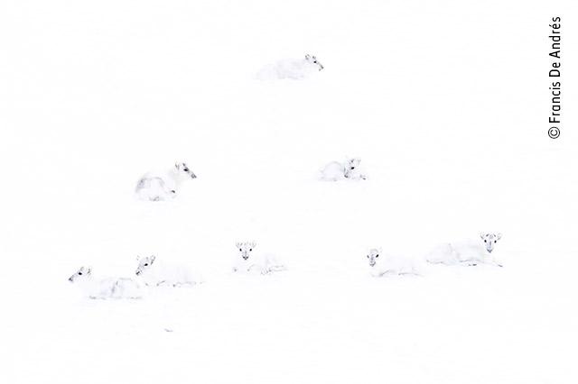 Spot the reindeer