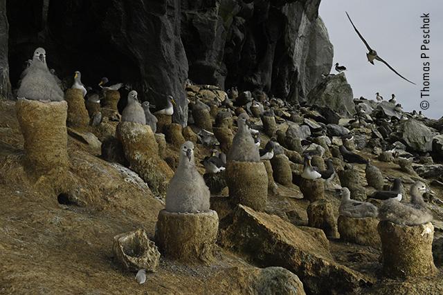 The Albatross Cave