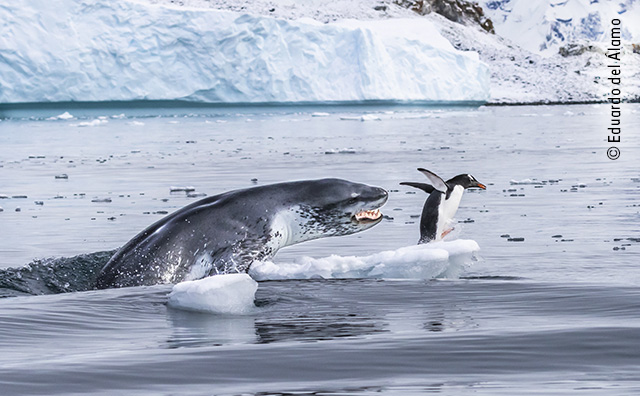 If Penguins Could Fly