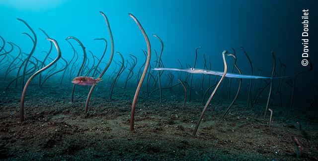 The Garden of Eels