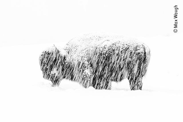 Snow Exposure