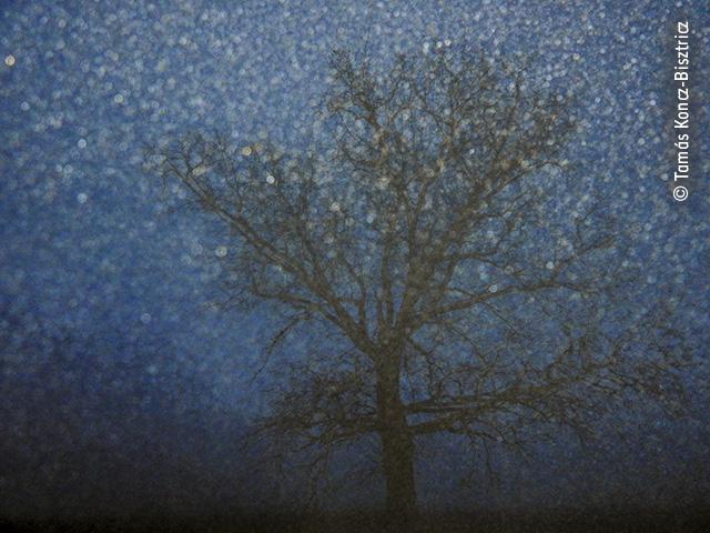 One Foggy Night